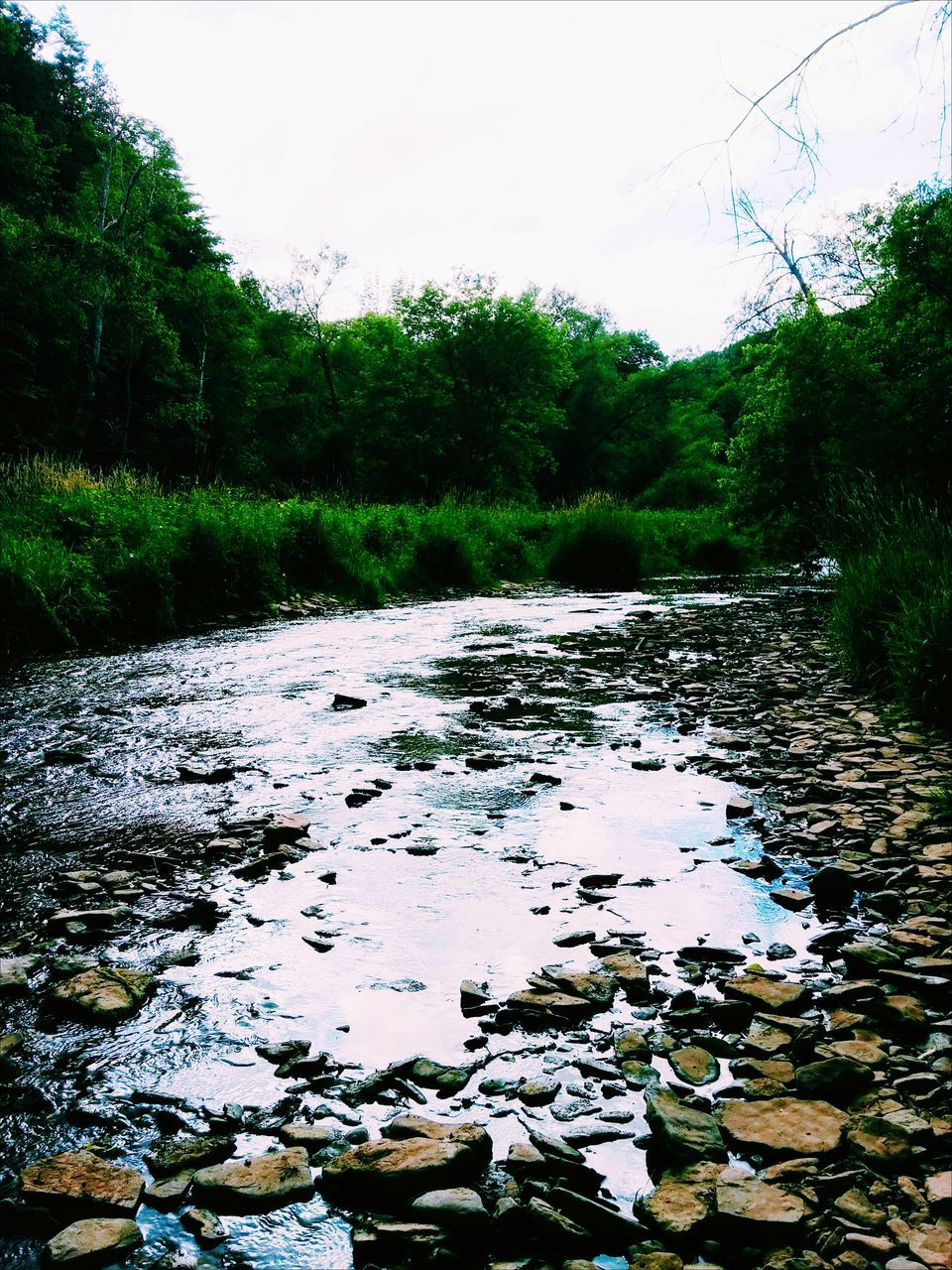 tree, nature, water, growth, stream, tranquility, forest, no people, day, scenics, tranquil scene, outdoors, beauty in nature, landscape, sky