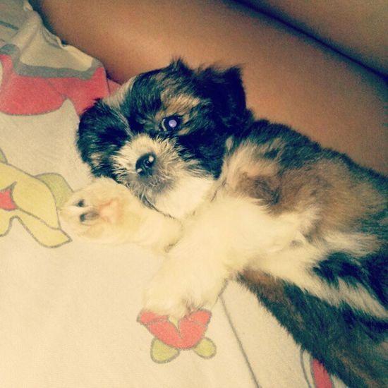 Poxa vida mae, tira esse flash da minha cara :( Dog Baby Cute Yasa love