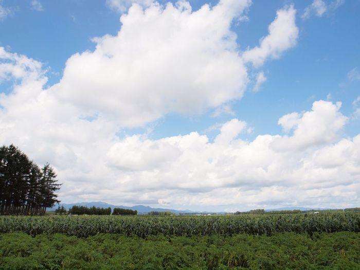 実家の畑 北海道 Hokkaido 畑