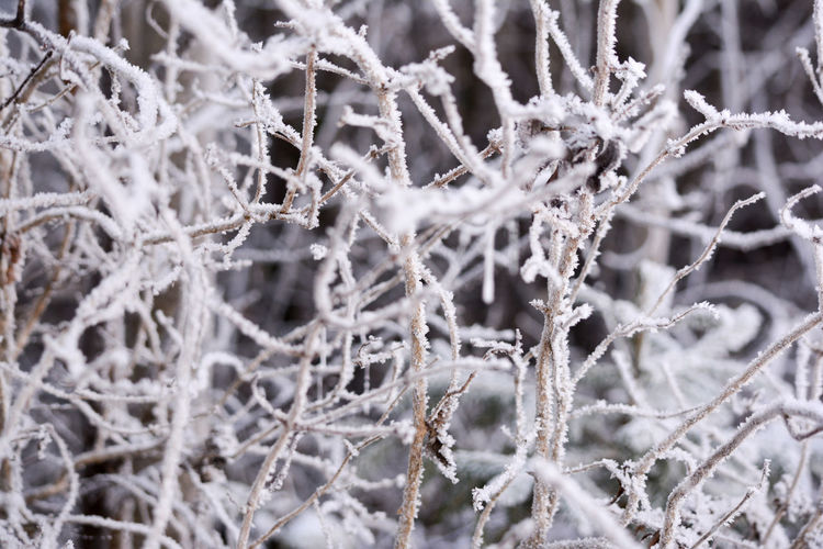 Close-up of frosted dried plants