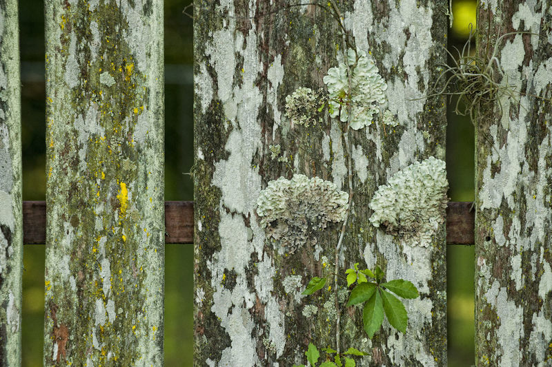 Close-up of plants growing on tree trunk