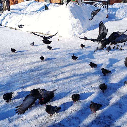 High angle view of birds on snow covered field