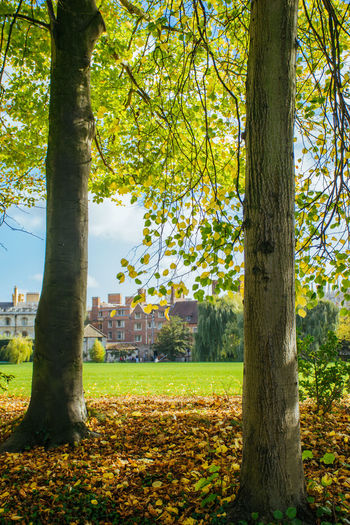 Autumn in Cambridge Autumn Autumn Colors Autumn Leaves Campus Architecture Autumn Beauty In Nature Branch Building Exterior Cambridge Change Day Grass Growth Leaf Maple Nature No People Outdoors Park Park - Man Made Space Scenics Tranquility Tree Tree Trunk