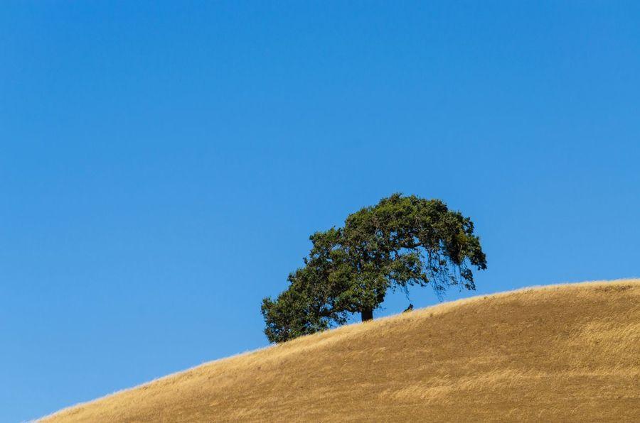 """""""Stillness"""" Countryside Trees Sky Blue Blue Sky Nature Hilltop Solitude Alone California"""
