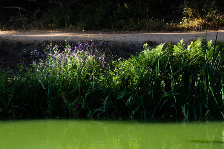 Layers of Light and Shadow in Nature Flowers Grass Green Inspiration Lake Leaves Light And Shadow Nature Path Pattern Pieces