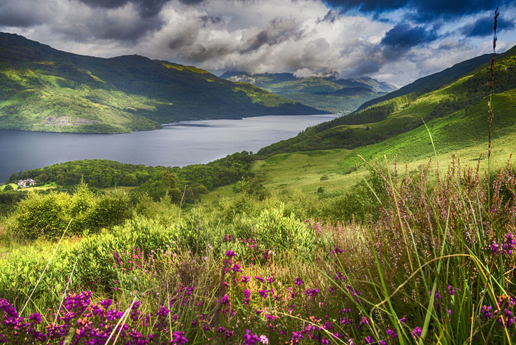 """""""...Where the sun shines bright on Ben Lomond."""" This shot of Loch Lomond was taken from the lower slopes of Ben Lomond, while climbing up from Rowardennan. Scotland Trossachs Beauty In Nature Ben Lomond Cloud - Sky Day Field Grass Green Color Growth Idyllic Landscape Loch Lomond Mountain Mountain Range Nature No People Outdoors Rural Scene Scenics Sky Tranquil Scene Tranquility"""