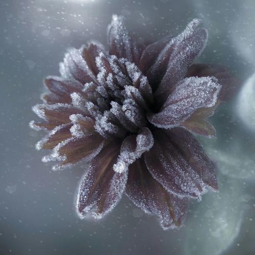 Frosty morning :) Szron Poranek Frost Morning Beauty In Nature Flower Close-up Autumn Nature Magic_photography Magic_shots Edit Photo EyeEm Gallery
