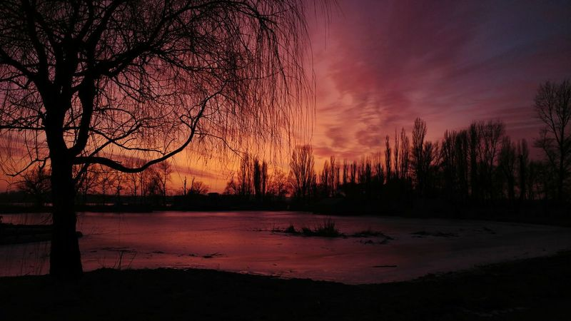 Sunset Tree Nature Sky Tranquility Silhouette Dramatic Sky Scenics Lake No People Cloud - Sky Tranquil Scene Night Beauty In Nature Landscape Ice Sundown Winter Frozen Evening Light Riverside Wintertime Outdoors Evening Sky Trees And Clouds