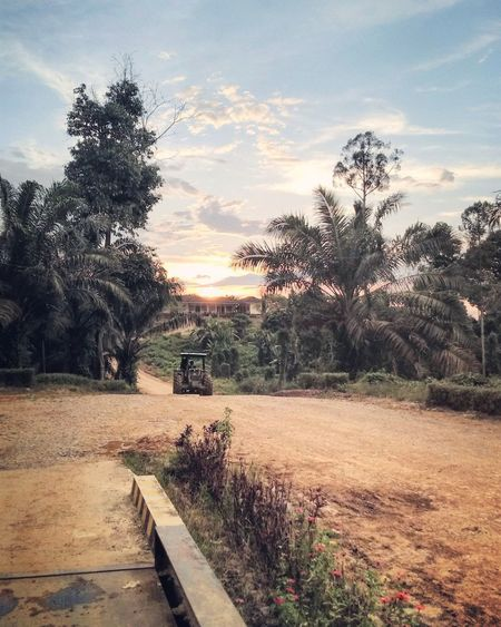afternoon harmony Sky Sunset Planter Tree Palm Frond Palm Tree
