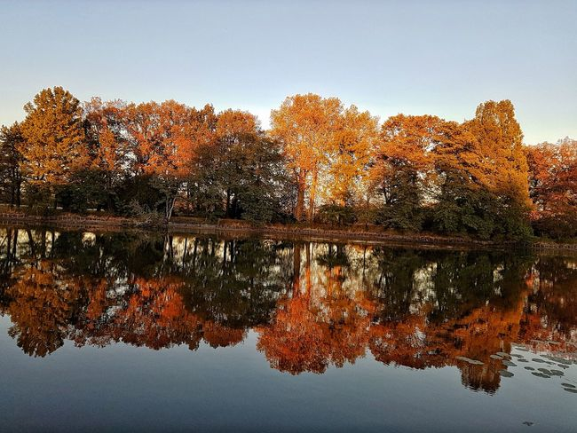Nature_collection Beauty In Nature Nature Park Herbst Autumn Water Pixelated Tree Lake Reflection Sky Close-up