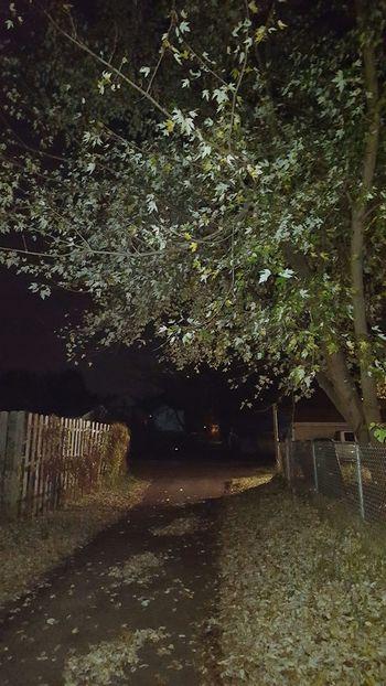 So dark yet so bright. Halloween Autumn Fall Tree First Eyeem Photo Parkersburg Sky WV Allyway