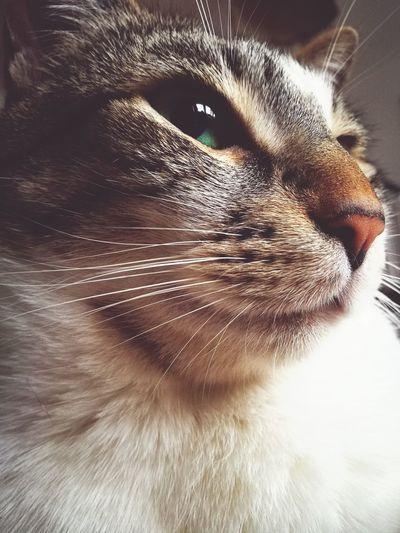 I'm a Queen! Greeneyes Imaqueen Sweet Cute Pets Cute Im Serious I Feel I Am Beautiful Im Free Im Amazing  Cats Animals Katzen Feline No People Portrait Domestic Animals Domestic Cat Indoors