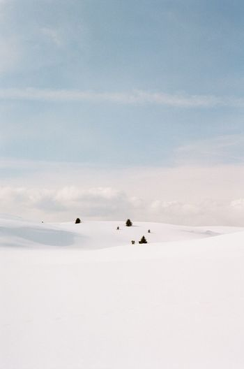 Snowy Martian landscape Mountain Dolomites, Italy Dolomites Dolomiti Pine Trees Against The Sky Pine Tree Pastel Pastel Power Soft Subtle Landscape Frozen Snowcapped Mountain