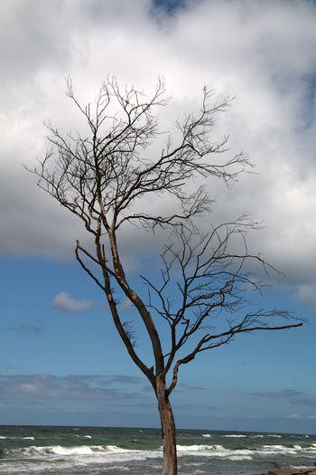 Cloud Nature Backgrounds Bare Tree Landscape Nature Beach Nature_collection Sea Sky Tourism Travel Destinations
