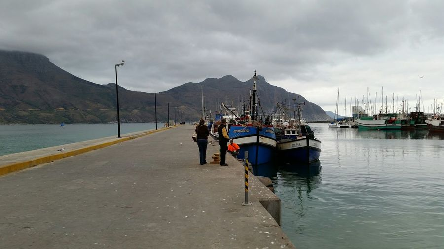 Hout Bay Relaxing Check This Out Feeding Seals