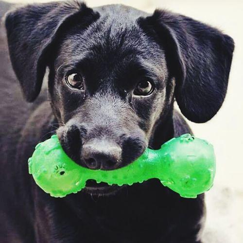 Darwid Dog Dogstagram DogLover❤💓💜🐾 Dogoftheday Dog Da Toys Photography Enjoyi Cute Pets That's Me