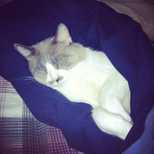 My precious baby kitty. Saren ArteriusCats Kitty Cuddle Allcats allshotsjjinstafamous instamood instagood ignation iphone4 igholic igdaily igers ig webstagram stillness statigram iphone4only bestoftheday mustachehappy