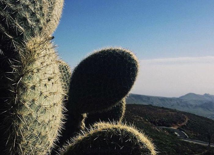 Close-up of cactus in desert against sky