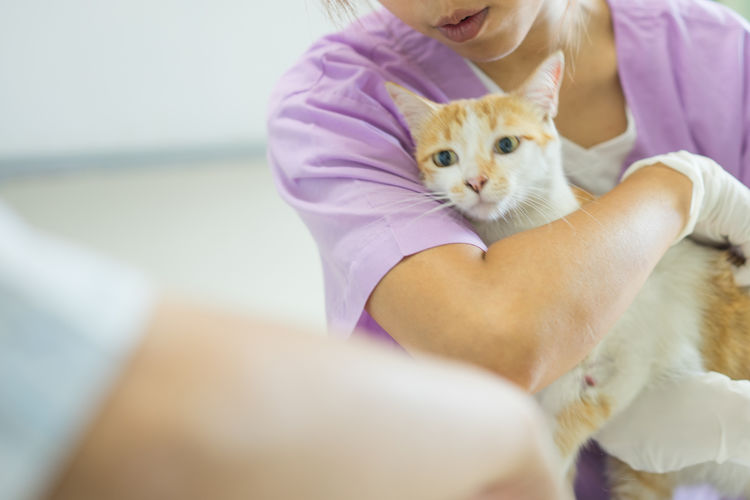 Midsection Of Veterinarian Holding Cat In Hospital