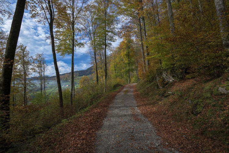 Rheintaler Höhenweg Adventure Autumn Beauty In Nature Day Forest Grass Landscape Mountain Nature Nature Reserve No People Non-urban Scene Outdoors Pine Tree Road Scenics Single Lane Road Sky The Way Forward Tree Wilderness Area Winding Road WoodLand