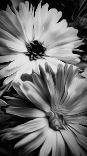 Sometimes it just feels like a Blackandwhite Photography day. Flower Flowerporn Flower Collection Flowers,Plants & Garden Creativity Edit Junkie Using Filters Two Is Better Than One