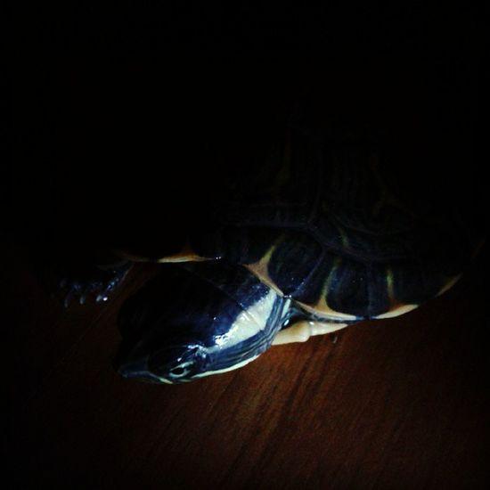 Hardlight Harshlight Photography Training Instapic Turtle