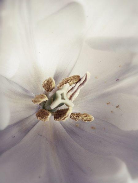 Flowers The Fragile