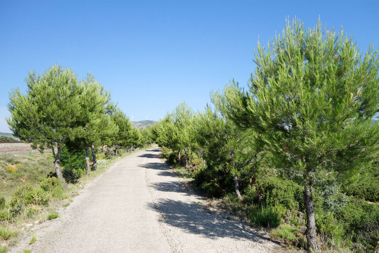 Bike Blue Castellón Clear Sky Cycling Day Green Color Green Way Growth Landscape Nature Nature No People Outdoors Plant Road Scenics Sky SPAIN The Way Forward Tree València