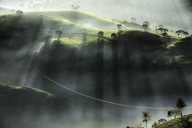 Ray of Light Cukul Pangalengan Tea Garden INDONESIA Nature Morning Fog Foggy Foggy Morning Max Bowen Tea Bandung Jawabarat Jawa Barat Tree Plant Sunbeam Sky Beauty In Nature Scenics - Nature Tranquility Cloud - Sky Outdoors Reflection Day Group Of People Land Water Tranquil Scene Forest Digital Composite