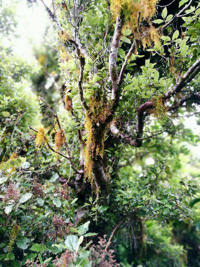 Nature Outdoors Moss New Zealand Natural Plant Tree New Zealand Greenery Wilderness Mt Karioi