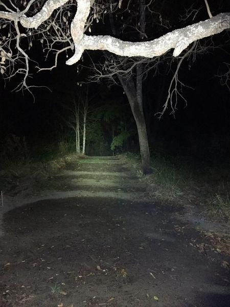 Tree Spooky The Way Forward No People Night Nature Outdoors Cerrado