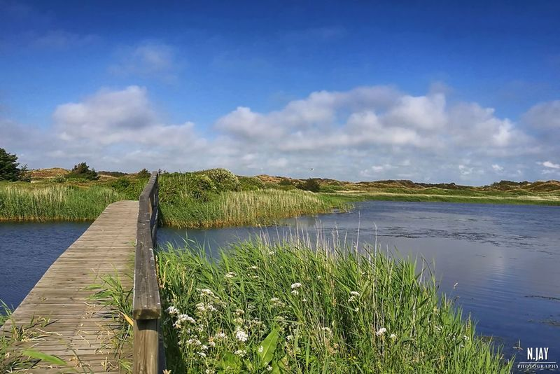 Nymindegab Denmark Landscape Landscape_Collection Nature Nature_collection Bridge Bridge - Man Made Structure Water Summer Eye4photography  Streamzoofamily EyeEm Masterclass EyeEm Nature Lover Blue Sky Discovering New Places Dunes Grass Plants Pure Nature HuaweiP9 Summertime Northsea Wood Denmark 🇩🇰