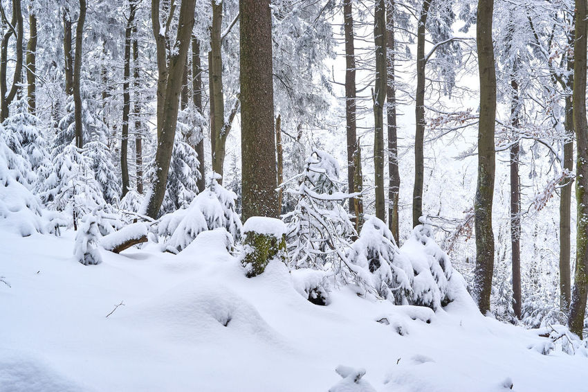 Beauty In Nature Cold Temperature Day Forest Landscape Mountain Nature No People Outdoors Snow Tree Winter