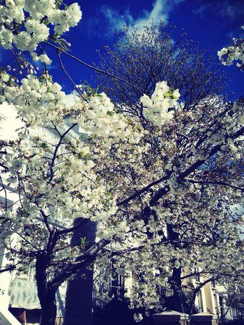 Spring Flowers EyeEm Nature Lover London