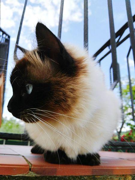 Lola Catlovers Cat Eyeemanimal Lover Brown Hair Big Eyes