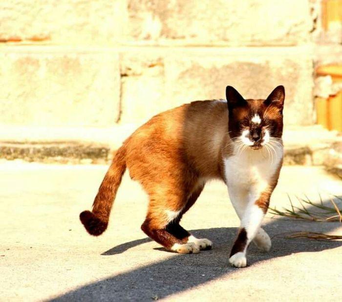 Cat♡ Taking Photos Pet Photography  Lola Lovepet♥