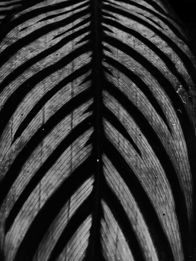 Full Frame Pattern Close-up No People Backgrounds Indoors  Textured  Wood - Material Selective Focus Day High Angle View Metal Architecture Wood Repetition Nature Abstract Design Natural Pattern