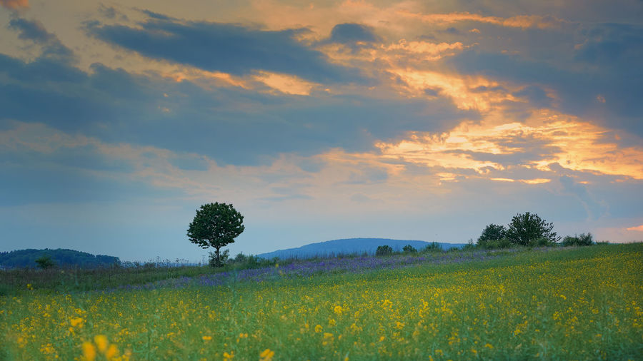 Agriculture Beauty In Nature Cloud - Sky Environment Field Flower Growth Idyllic Land Landscape Nature No People Outdoors Plant Rural Scene Scenics - Nature Sky Tranquil Scene Tranquility Tree Yellow