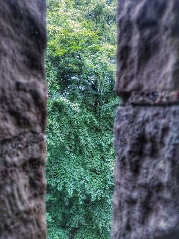 a knights view Arrowslit Knights Tree Tree Trunk Close-up Grass Green Color Plant Sky Greenery Creeper