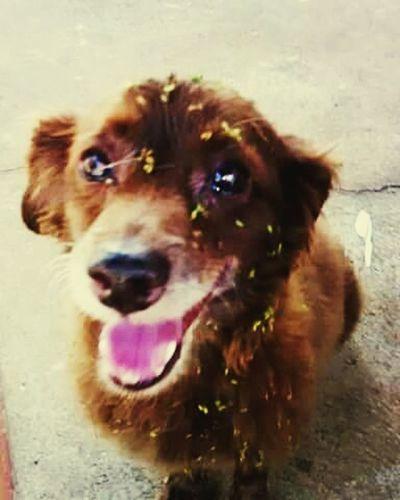 Perdido Dog Cãozinho Amigo Filho Saudade Por Ai HoradaAventura Natureza 🐦🌳 Feliz Love ♥ Amor ♥ Lindo