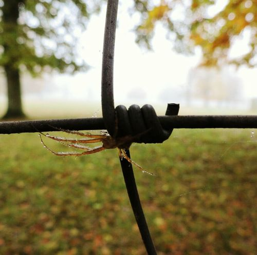 Hanging Out Taking Photos Naturephotography Nature EyeEm Nature Lover Close-up Beauty In Nature Spider Macro Spider Through The Fence Barbedwire Autumn 2015