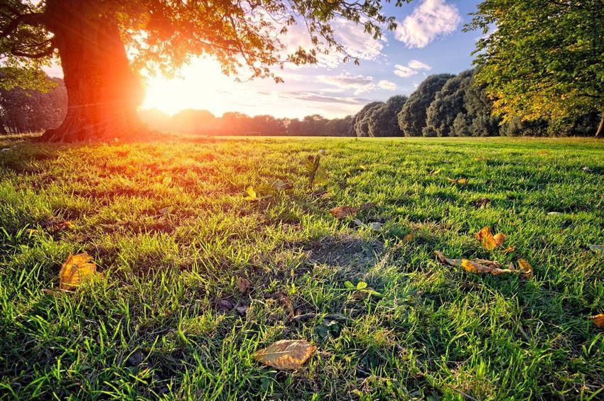 end of summer... Landscape_Collection Nature_collection Sun_collection Summertime