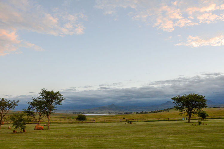 On the road to the Dragensberg in Kwazulu-Natal Amphitheatre Backpackers Lodge Bergville KwaZulu-Natal South Africa Africa Beauty In Nature Cloud - Sky Day Grass Kwazulunatal Landscape Nature Outdoors Scenics Sky Tranquil Scene Tree