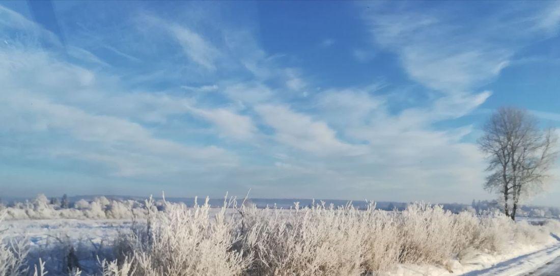 Winter Cold Temperature Snow Nature Tranquil Scene Frozen Landscape