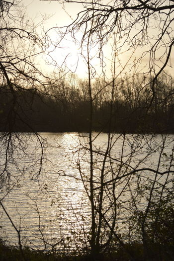 Tree Water Bare