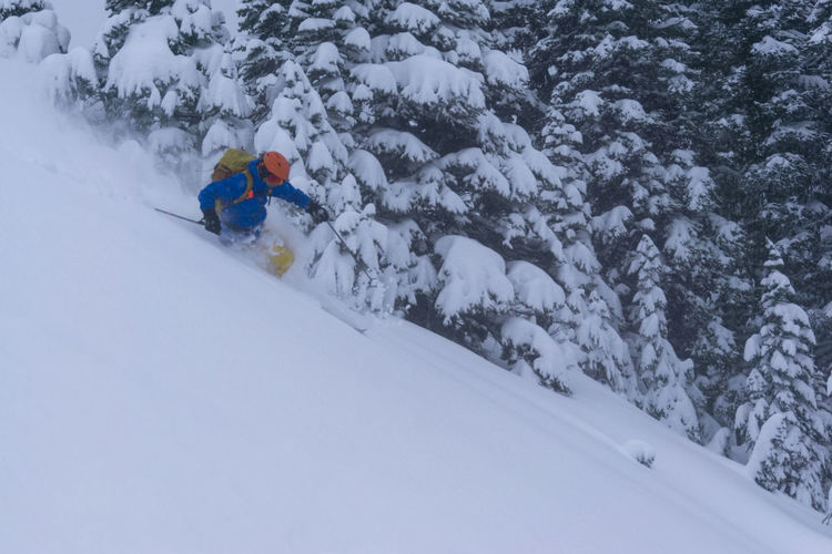 Ski Skier Skiing Powder Snow Fresh Snowfall Fast Speed Slope Trees Branches Snow-covered Deep Winter Cold Mountains Mountain Sport Leisure Activity Winter Sport Holiday Vacations Adventure Outdoors