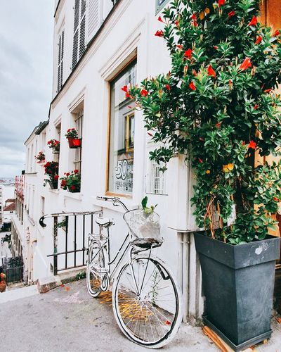 Bicycle by potted plant outside house in paris