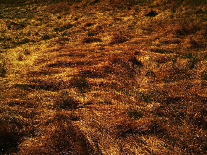 Grass on the field Backgrounds Outdoors No People Beauty In Nature Nature Day Beauty In Nature Tranquility Growth Wind Grass Grassland
