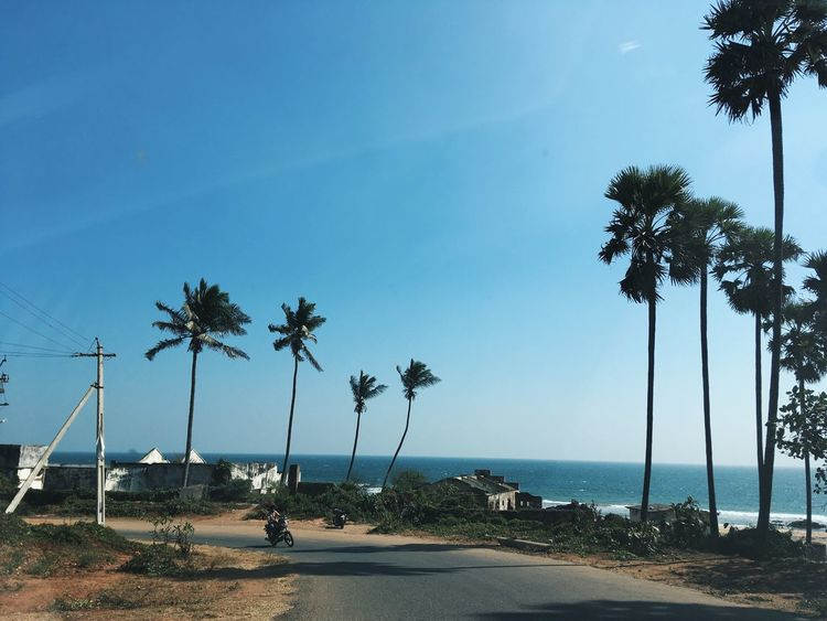 Sunny day Goplaces Wanderlust Palm Tree Tree Beach Sea Tropical Climate Scenics Horizon Over Water Beauty In Nature Outdoors EyeEmNewHere An Eye For Travel