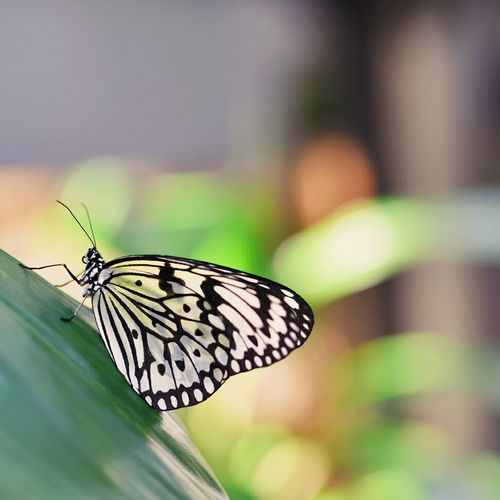 Close-up of butterfly perching on plant